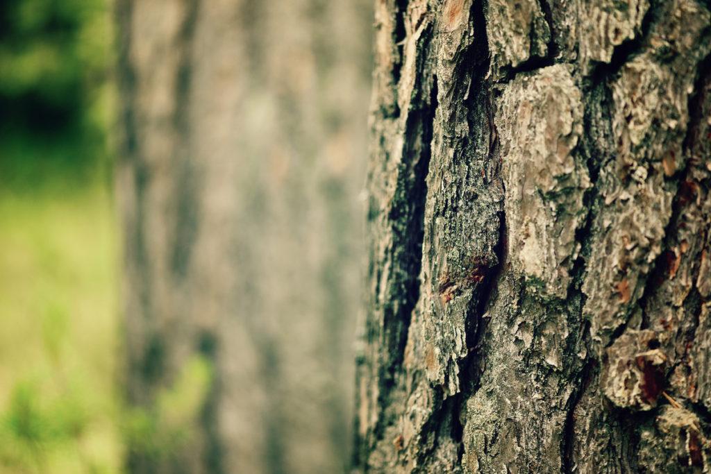 las korkowy - jak powstaje korek CVGS konwerting