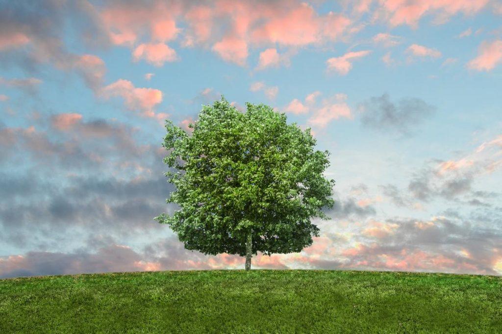 zarzadzanie środowiskowe przez CVGS konwerting